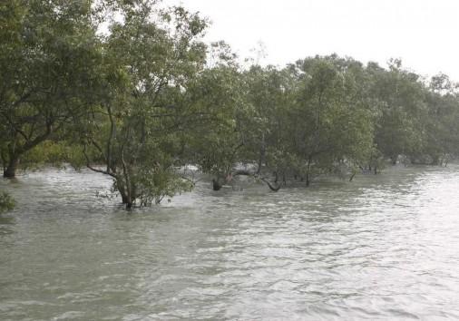 Sundarban 4