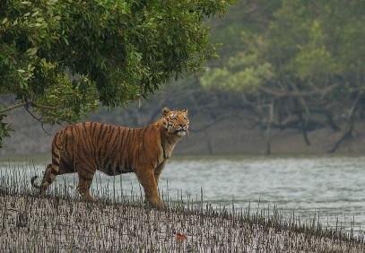 Sunderban Mangrove Wetland & Tiger Reserve