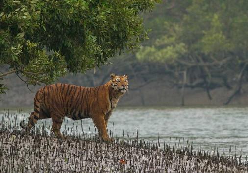 Sundarban 5