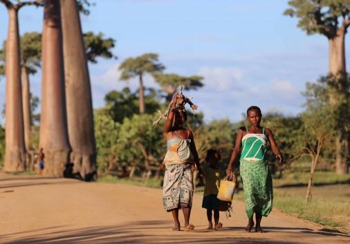 Xmas Baobab People