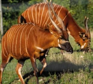 8 Days Kenya Classic Safari