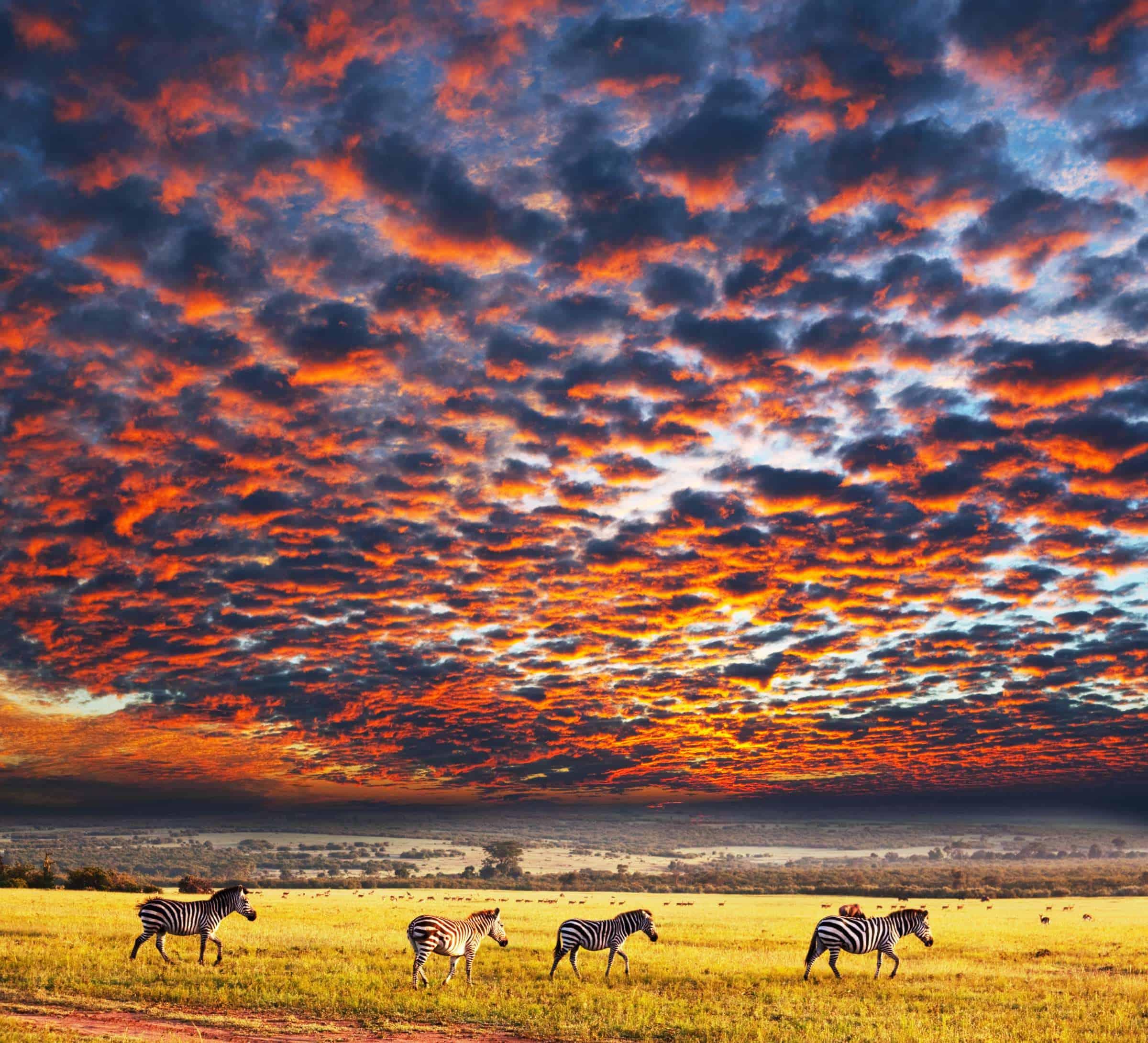 Ann Top Serengeti National Park X0c0l1
