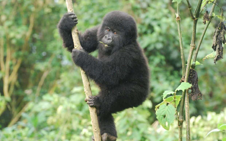 Bwindi Gorillas 23 1240x775