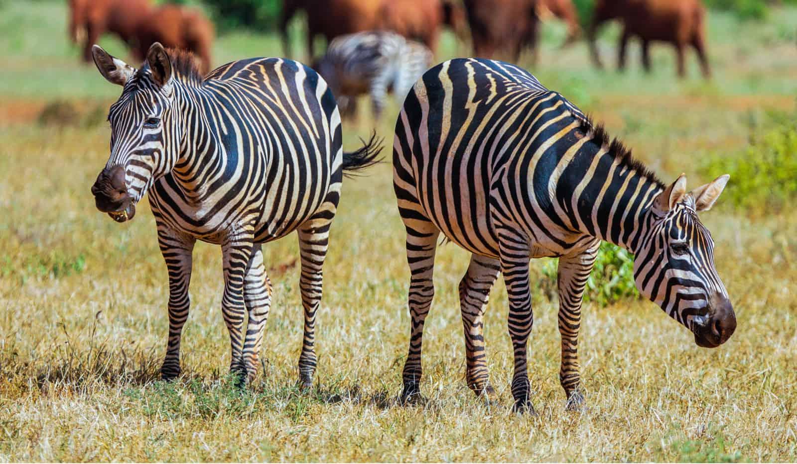 Diani Safari Tours Julius Tours Mombasa Safari Tours Kenya 2