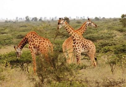 12-Day Kenya & Tanzania Safari