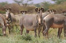 10 Days Kenya Paradise Safari