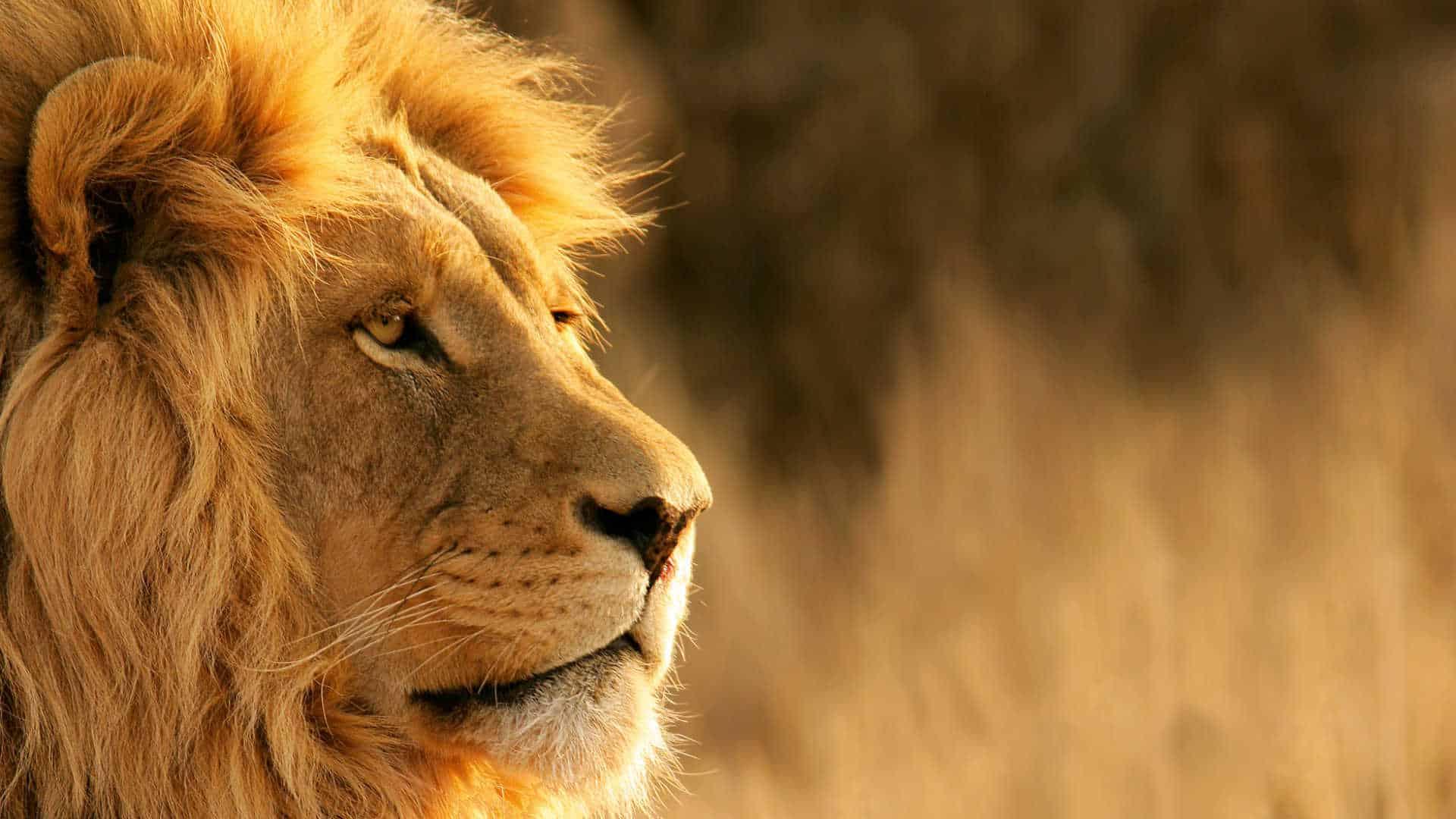 Kenya In Style 40769878 1554105069 Imagegallerylightboxlarge