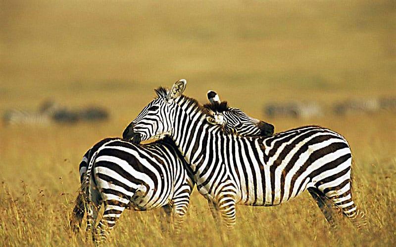 Kenya Safari 1b