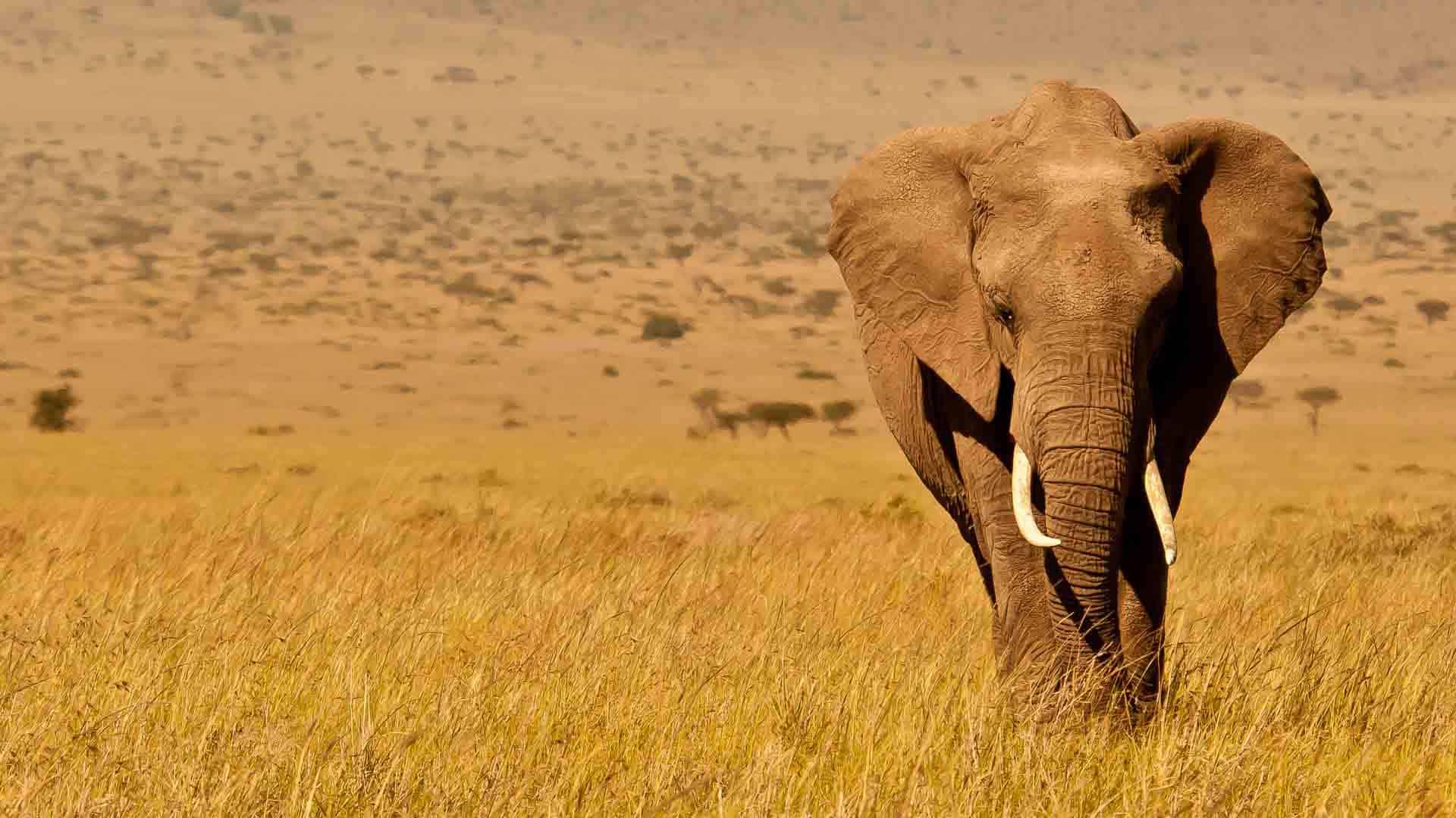 Kenya Wildlife Elephant Copyright Will Bolsover