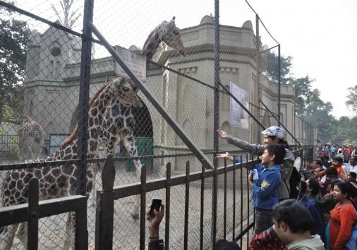 Kolkata Alipore Zoological Garden 105