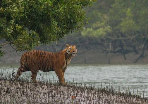 Kolkata Sunderbans 170