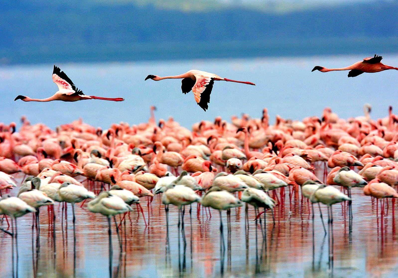 Lake Manyara Birds 1