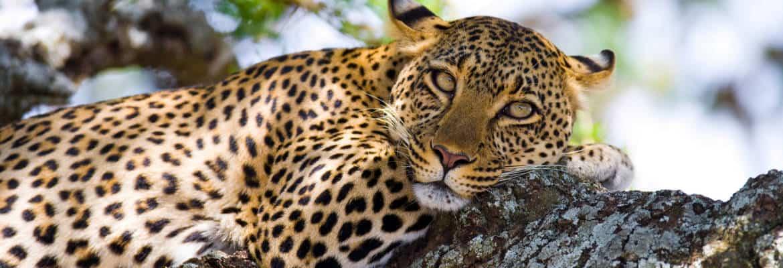 Maasai Mara 42522443 1522938050 Wideinspirationalphoto1170