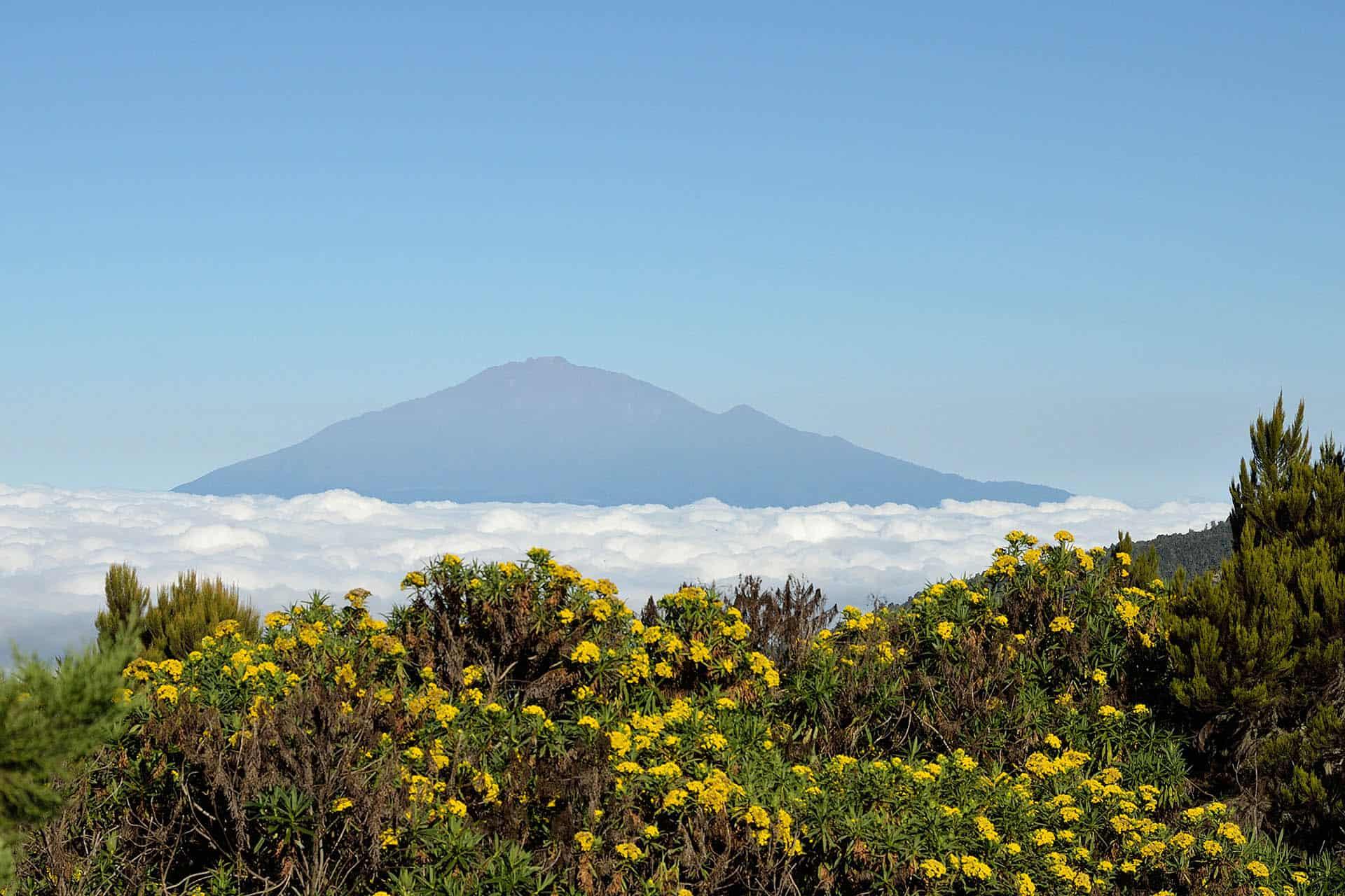 Kilimandjaro Mai, Juin 2011
