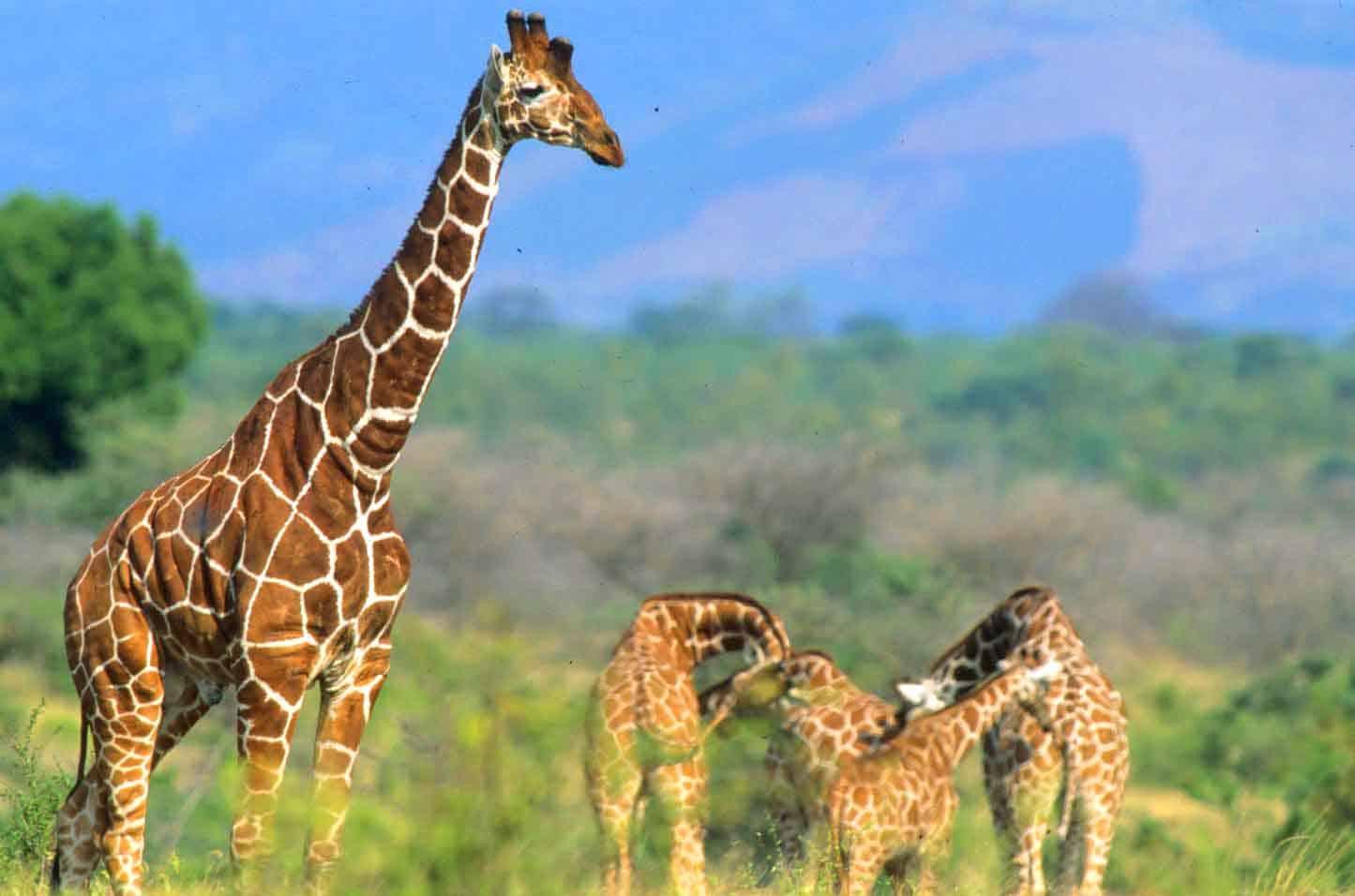 Meru National Park 1