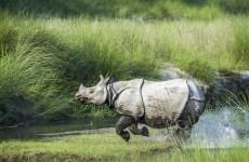 Explore Wild Nepal