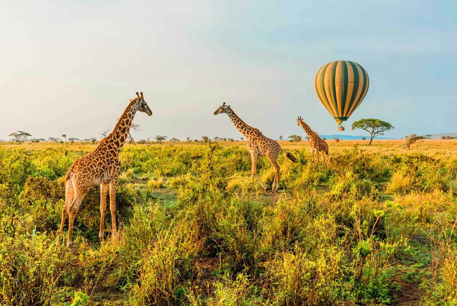 Tanzania Safari Tours 2