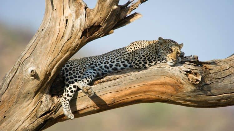 Three Day Samburu Safari Tour 2 478803 1564461902