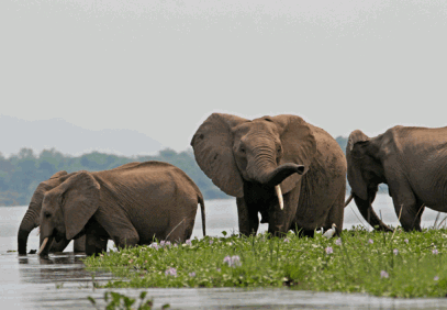 Chobe National Park Day Trip