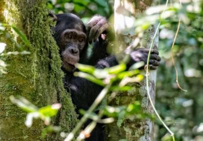 3-Day Canopy Walk & Chimpanzee Safari