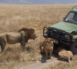 4-Day Tarangire, Ngorongoro & Serengeti National Park Safari