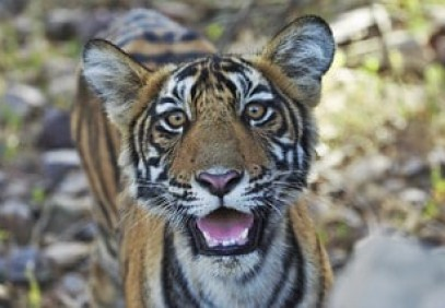 Wildlife and Cultural Wonders