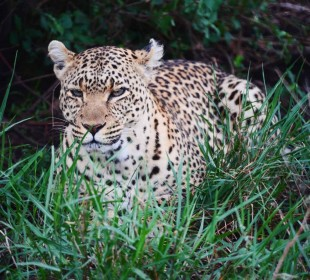 3-Day Tanzania Sharing Safari Tarangire, Ngorongoro & Lake Manyara