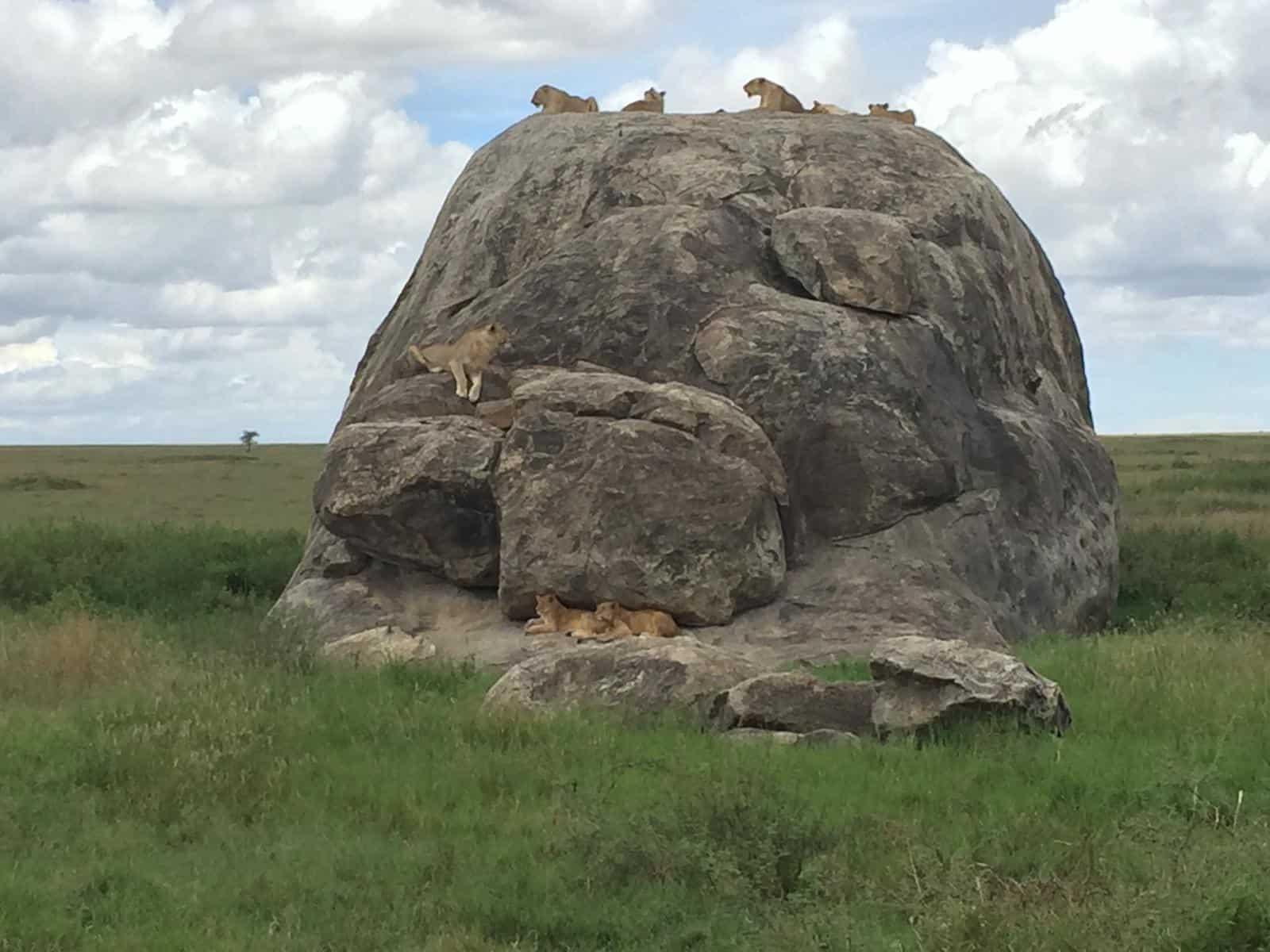 Africa Natural Tours Tanzania National Park (37)