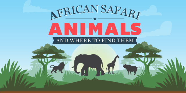 African Safari Animals and Where to Find Them