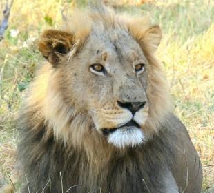 10-Day Luxury Tented Camp Safari