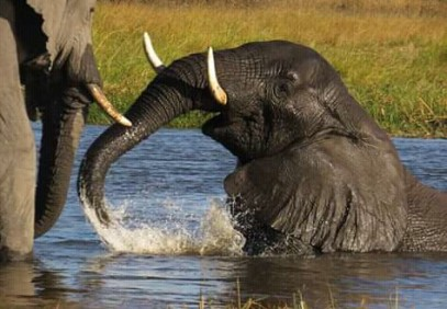 Chobe National Park Day Trip