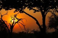 12-Day Victoria Falls to Okavango Delta Safari