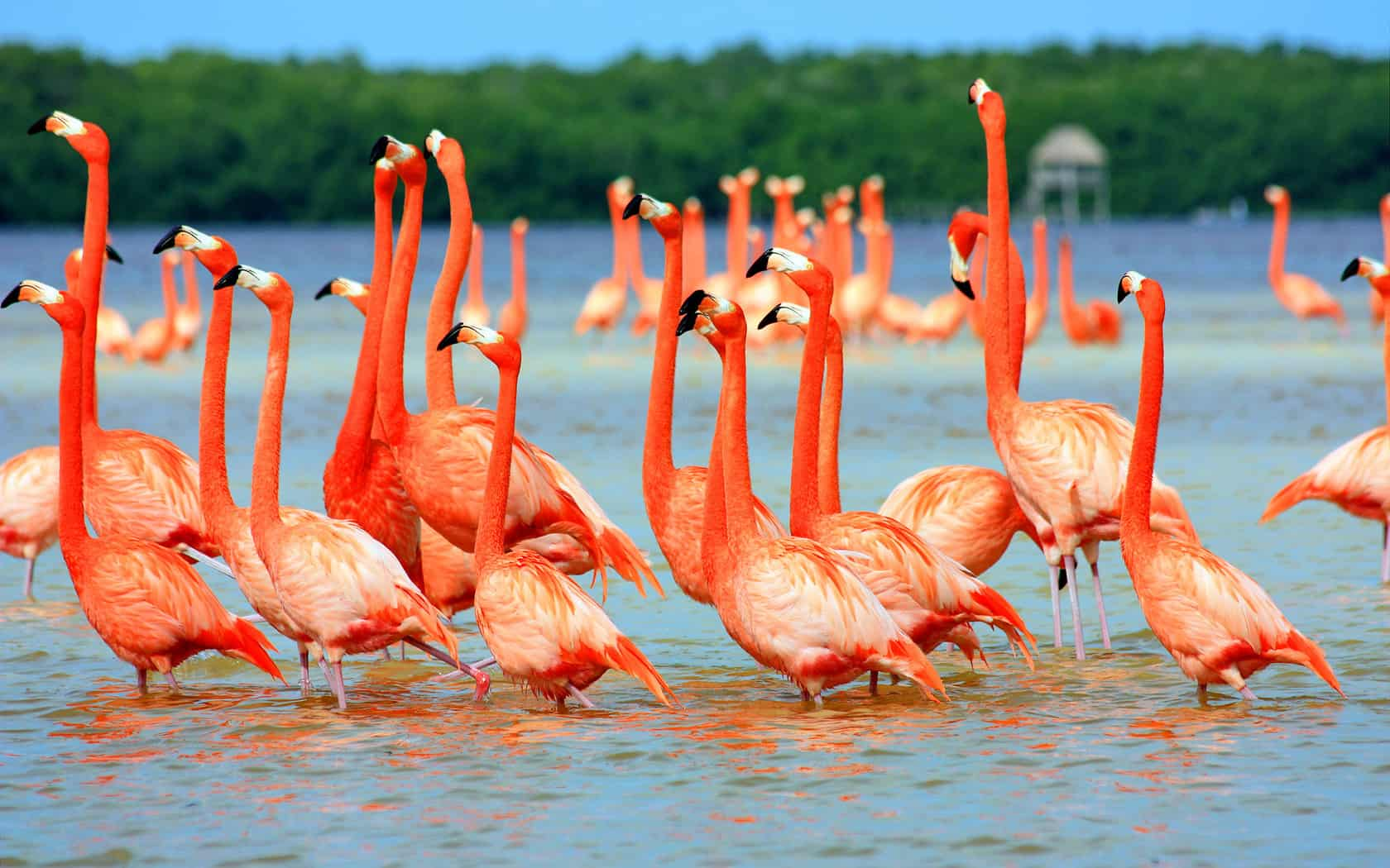 Flamingo 44