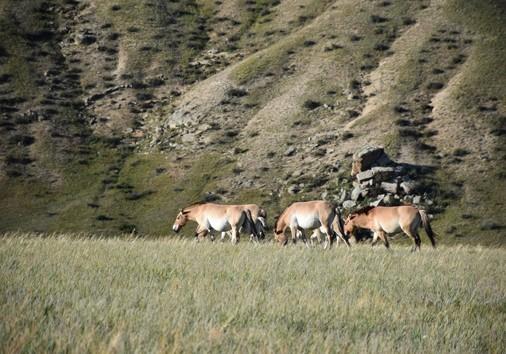 Hustai National Park1