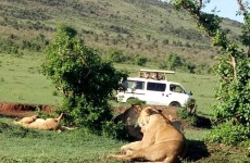 3 Days in Masai Mara