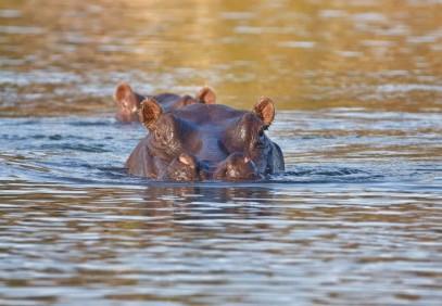 11-Day Botswana Nxai Pan to Chobe Safari