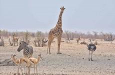 10-Day Botswana Desert Camping Safari