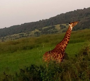 3 Days Budget Masai Mara Safari
