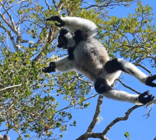 14-Day Madagascar Wildlife Tour