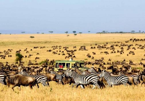 Serengeti National Park Game Viewing 1