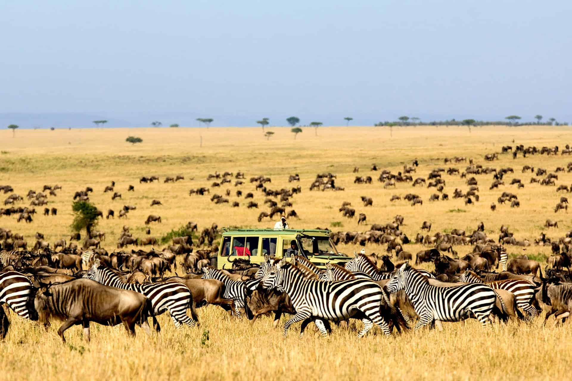 Serengeti National Park Game Viewing 1
