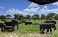 5-Day Tanzania Sharing Safari