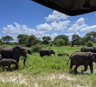 5-Day Northern Tanzania Adventure Safari