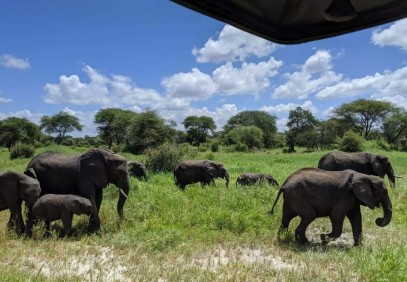 5-Day Tanzania Safari with Africa Natural Tours