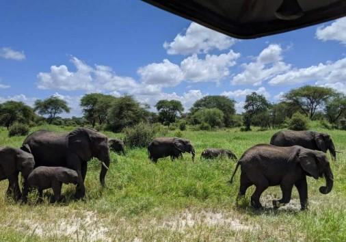Africa Natural Tours Kilimanjaro Tanzania (16) Copy Copy
