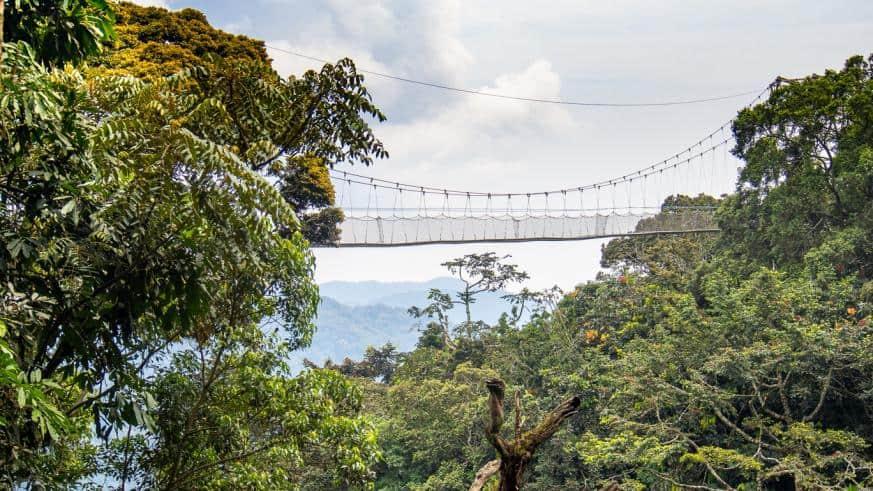 Canopy Walkway Nyungwe Forest Rwanda