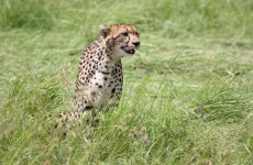 3-Day Masai Mara Safari Tour