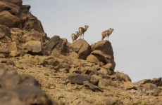 Safari to the Gobi Desert – Small Circuit