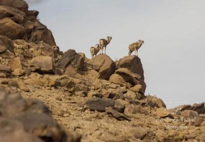 Safari to the Gobi Desert – Small Circuit