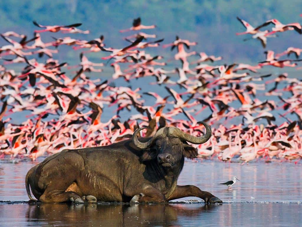 Featured Lake Nakuru Np F